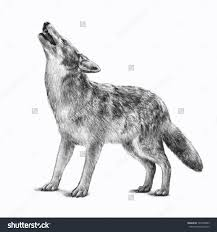 scary halloween white background royalty free timberwolf or gray wolf vector u2026 147003095 stock