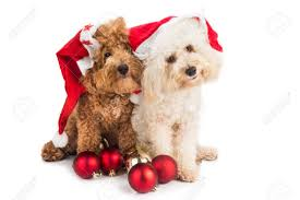 Dog Christmas Ornaments Two Cute Poodle Puppies In Santa Costume With Christmas Ornaments