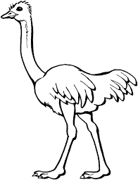 perfect ostrich coloring page 72 for your free coloring book with