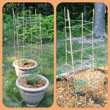 bamboo stakes and twine tomato trellis wrap the twine up and