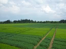 chambre d agriculture cantal rendez vous céréales et fourrages visite des essais le 26 juin à