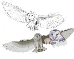 barn owl sketches by grafight on deviantart