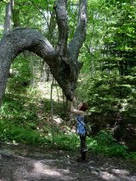 tree magic forest whoa mori mori forest