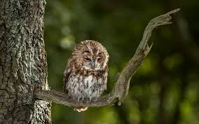 owl on tree wallpaper hd wallpaper background