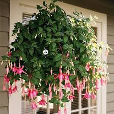 Best Plants For Hanging Baskets by