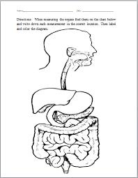 digestive system human body