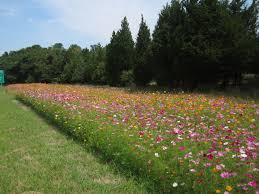 new jersey native plants new jersey wildflowers in august what intrigues sterling