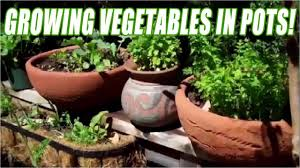 Gardening For Beginners Vegetables by Growing Vegetables In Pots For Beginners Youtube