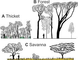 Tropical Savanna Dominant Plants - functional differentiation of biomes in an african savanna forest