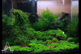 Aquascape Com Moss Nano Aquascape Nano Shrimp Tank Pinterest Aquariums
