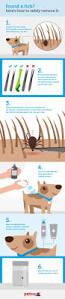 best 25 ticks on cats ideas on pinterest ticks in house ticks