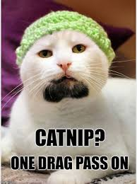 Hipster Cat Meme - bearded hipster cat drinks milk out of a mason jar and poops in