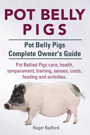 pot belly pigs pot belly pigs complete owners guide pot bellied