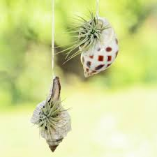 beautiful air plant holder lawn u0026 garden air plant wall hanging