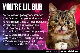 Lil Bub Meme - which cat meme are you find out with this fun quiz