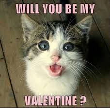 grumpy cat valentines will you be my grumpy cat meme grumpy cat pictures