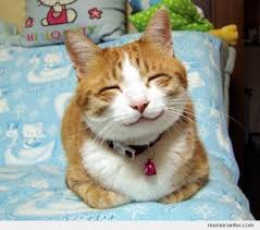 Smiling Cat Meme - smiling cat by ben meme center