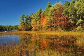 Massachusetts forest images Myles standish state forest massachusetts search in pictures jpg