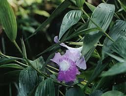 Flower Orchid Orchid Flower Orchid Flower