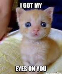 I Got My Eyes On You Meme - th id oip onbf3dknvxzk7flaufjx4qdker