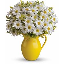 teleflora u0027s sunny day pitcher of daisies in frederick md amour
