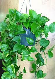 plants foliage plants house plants blumengarten florist