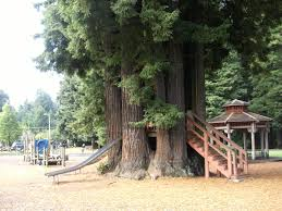 halloween city eureka ca sequoia park forest u0026 garden sequoia park zoo