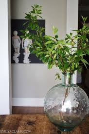 Large Clear Glass Floor Vases Best 25 Large Glass Jars Ideas On Pinterest Glass Jars With