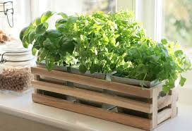 herb garden planter kitchen herb window planter box wooden trough metal plant pots herb