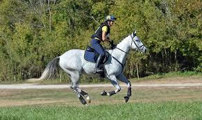 Nice Hourse Horses Cotton Meadows Farm
