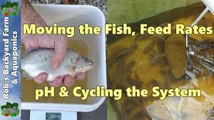backyard farm aquaculture ras vlog moving the fish feed rates