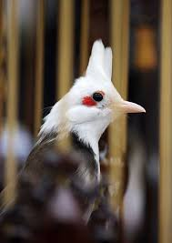 ornamental birds of the rich in news vietnamnet