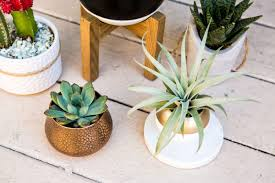 Home Decor The Best Indoor Plants Live The Nekter Life - Home decoration plants