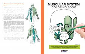 Anatomy And Physiology The Muscular System Easy Human Anatomy Physiology Of The Body Learn Through Coloring