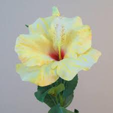 Yellow Hibiscus Flowers - hibiscus flower and bud yellow h048 e2