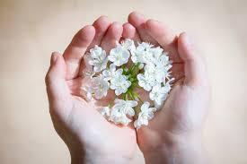 white flower white flower on human free stock photo