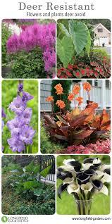 Deer Proof Fence For Vegetable Garden Best 20 Deer Garden Ideas On Pinterest Deer Resistant