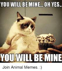 Mine Meme - you will be mineoh yes you will be mine join animal memes grumpy