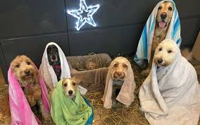 dog christmas this dog filled nativity is the best photo you ll see this