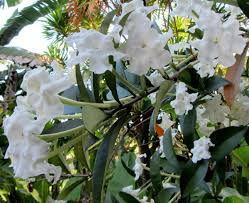 list several plants native to south america fairchild tropical botanic garden u003e horticulture u003e 2014 members