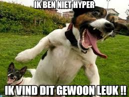 Hyper Dog Meme - ik ben niet hyper hyper dog meme on memegen