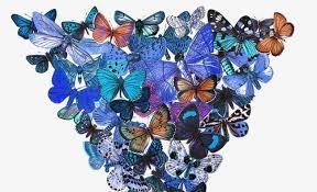 a bunch of butterflies bunch butterfly diagram butterfly pattern