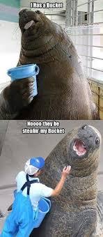 Meme Bucket - bucket meme happy proud memes comics pinterest meme