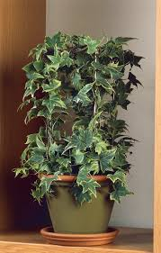 houseplants benefits of houseplants why you need more houseplants