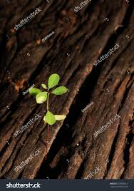 fresh green plant seed stock photo 335839412