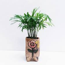 indoor palm aliexpress com buy 10 pcs bag chamaedorea elegans seeds potted