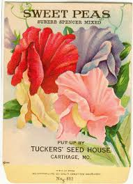 flower seed packets vintage flower seed packet tuckers lithograph by dvioletlady