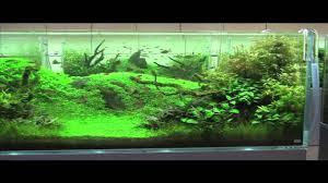 japanese aquarium adg in japan 2010 nature aquarium party youtube