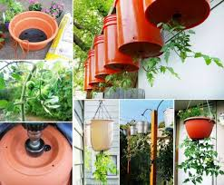 Upside Down Tomato Planter by Upside Down Tomatoes Diy Instructions Planters Gardens And