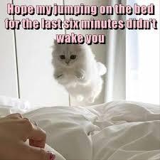 Monday Cat Meme - cat memes funny and cute kitten memes